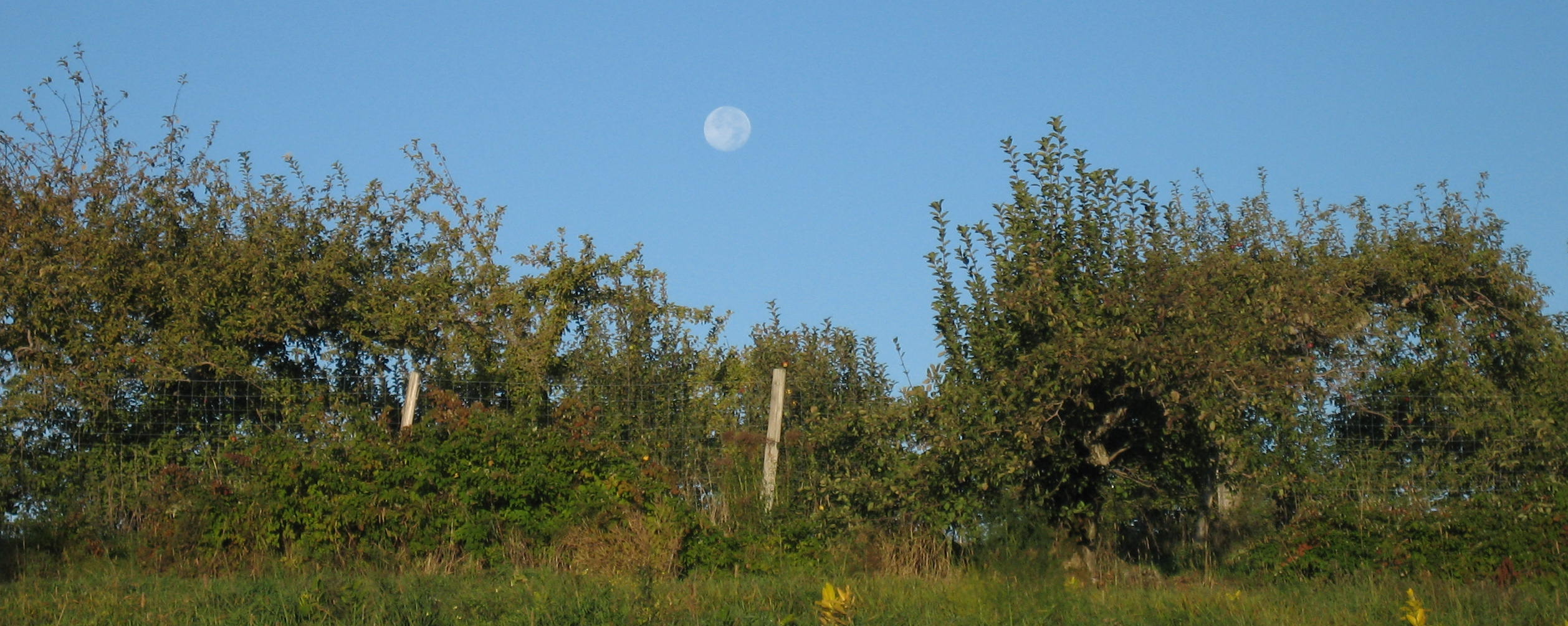 Moon over Shaker Orchard